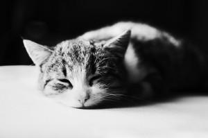 gato-durmiendo